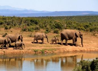 2 Nights/3 Days Amboseli Safari