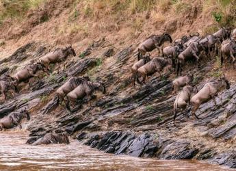 3 Nights/4 Days Maasai Mara Safari