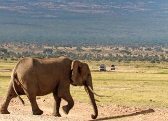 Amboseli/Tsavo/Ngorongoro